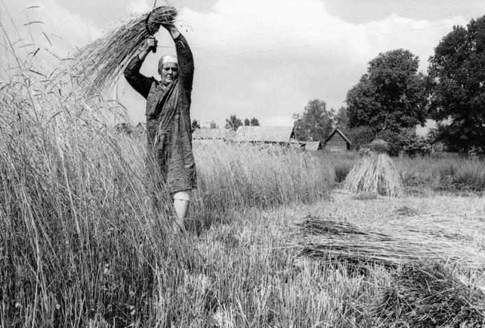 LITHUANIA - woman with sickle in Zervynos at the border with Belarus